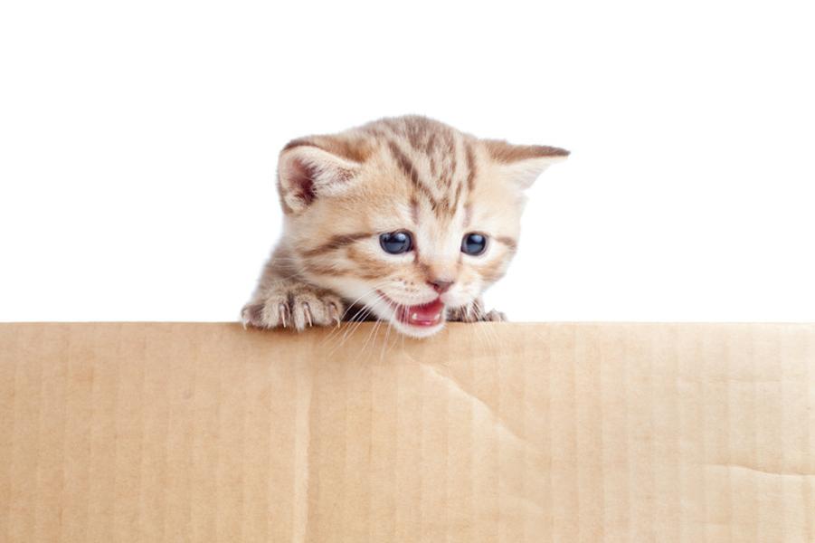 umziehen mit katzen stressfreier wohnortswechsel auf vier leisen pfoten. Black Bedroom Furniture Sets. Home Design Ideas